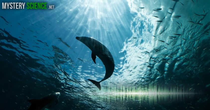 sonidos en el oceano