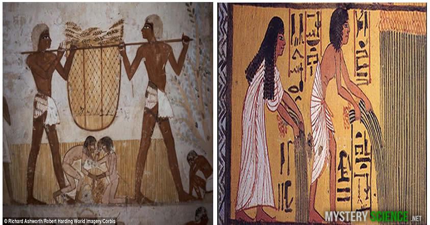 vegetarianos en egipto