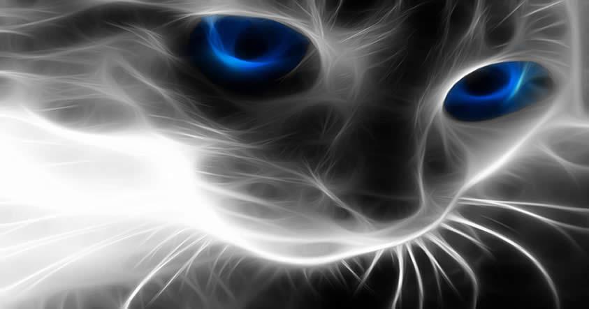 psiquicos y gatos