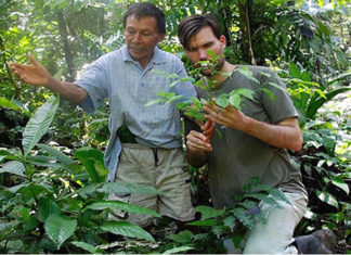 hierbas amazónicas