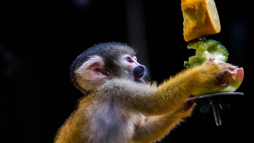 Zoológico deja de dar fruta a los animales por su alto contenido de azúcar