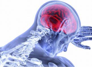 Científicos identifican la parte del cerebro responsable del libre albedrío