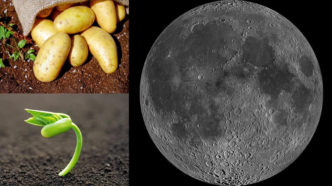 Hormona vegetal podría ser la clave para cultivar en otros planetas