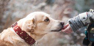 Científicos prueban que los perros entienden las palabras mejor de lo que sospechábamos