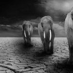 La naturaleza necesitará millones de años recuperarse de los daños de la humanidad