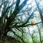 Extraño video viral de un bosque que «respira»