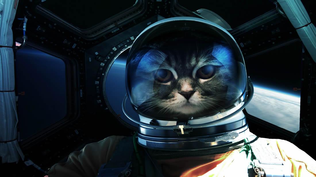 Hace 55 años se envió el primer y único felino al espacio