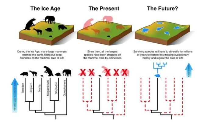 Según la investigación, los mamíferos pequeños tendrán que evolucionar durante los proximos millones de años para compensar la pérdida de grandes mamíferos.