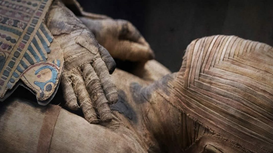 Nueva técnica de rayos X permite ver los nervios y vasos sanguíneos de una momia