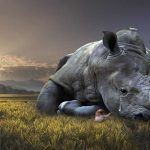 China revoca prohibición del uso de cuernos de rinoceronte y huesos de tigre