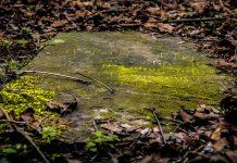Descubren niño italiano al que se le dio un «entierro de vampiro» hace 1.500 años