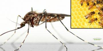 Un biólogo afirma conocer una protección eficaz contra el Zika y Dengue