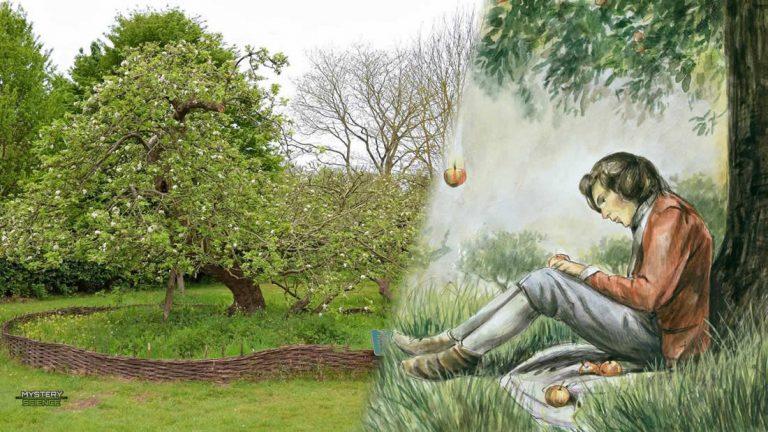 Árbol que inspiró a Isaac Newton sigue firme