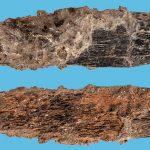 Cuchillo de 90.000 años es la herramienta ósea especializada más antigua
