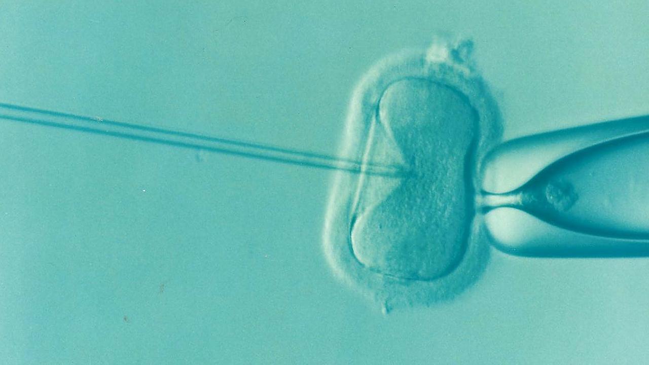 Científicos logran convertir células sanguíneas en células de óvulos humanos