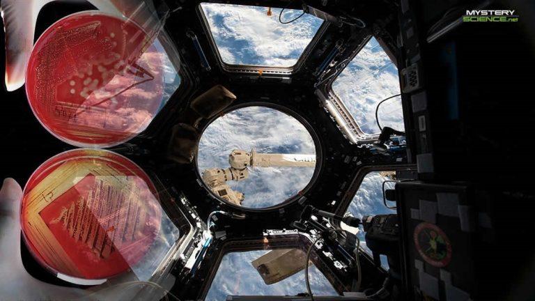 Encuentran bacterias potencialmente peligrosas en la Estación Espacial Internacional