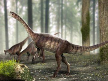 Descubren en Brasil nuevas especies de dinosaurio de cuello largo