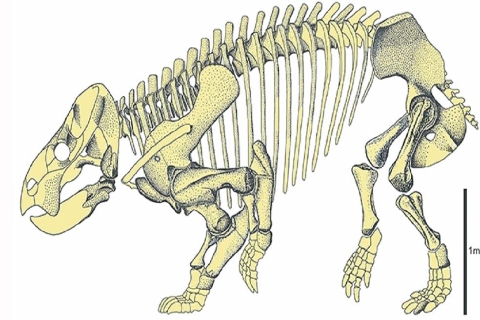Esqueleto del Lisowicia bojani.
