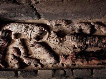 Hallan docenas de momias de gatos en tumba egipcia de 6.000 años