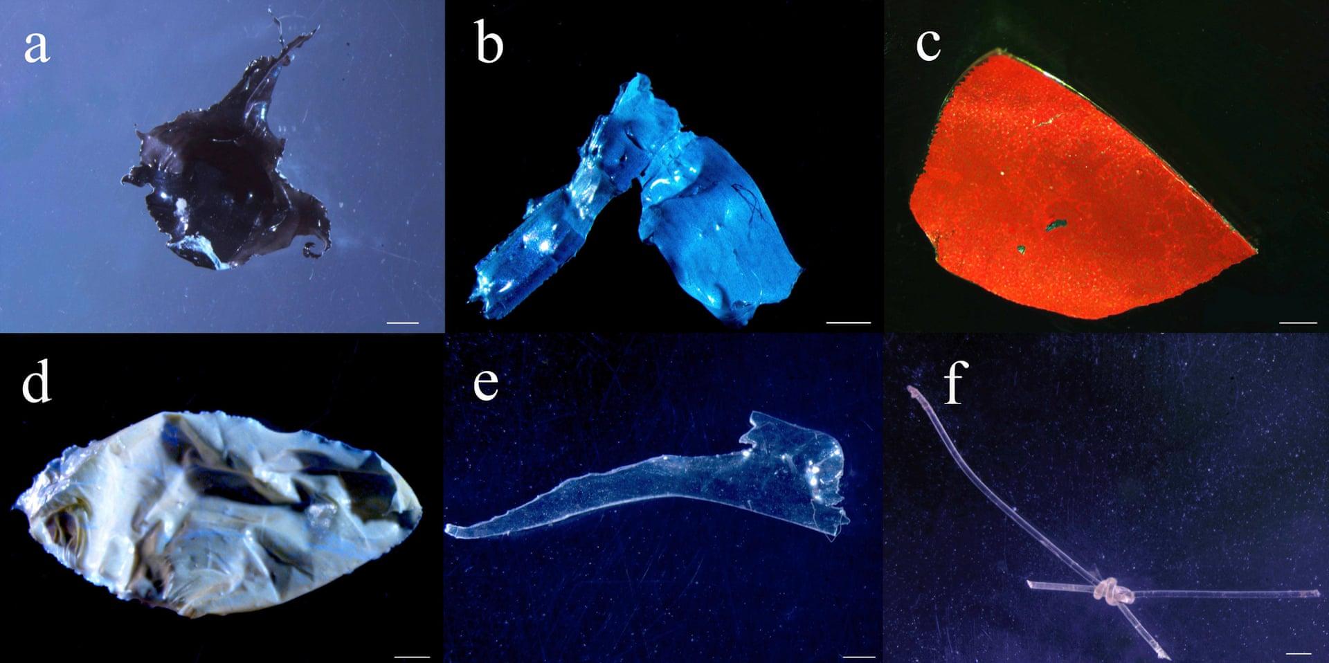 Residuos plásticos encontrados en los estómagos de peces del Amazonas.