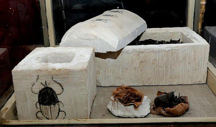Hallan momias de gatos y escarabajos en Egipto