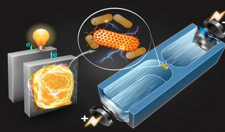 Desarrollan técnica para identificar bacterias que producen electricidad