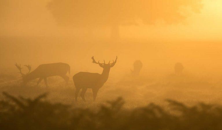 Alerta por la enfermedad del 'ciervo zombie' que podría propagarse a los humanos
