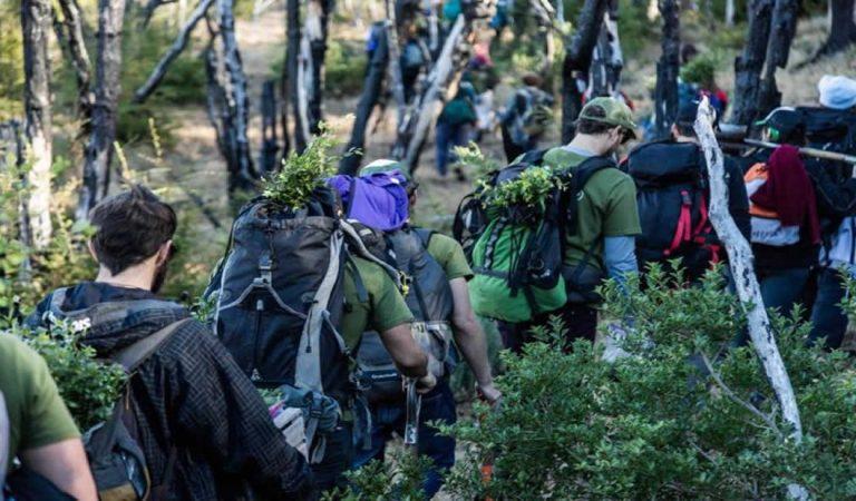 Jóvenes plantaron 11.500 árboles para recuperar un bosque que se había incendiado en el 2015