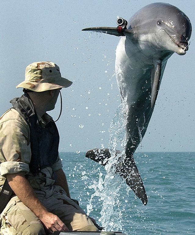 Delfin y su entrenador