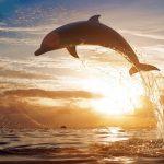 Nueva Zelanda prohíbe a los turistas nadar con delfines nariz de botella