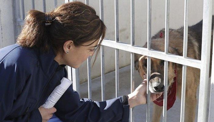 Centro de Protección Animal de Madrid