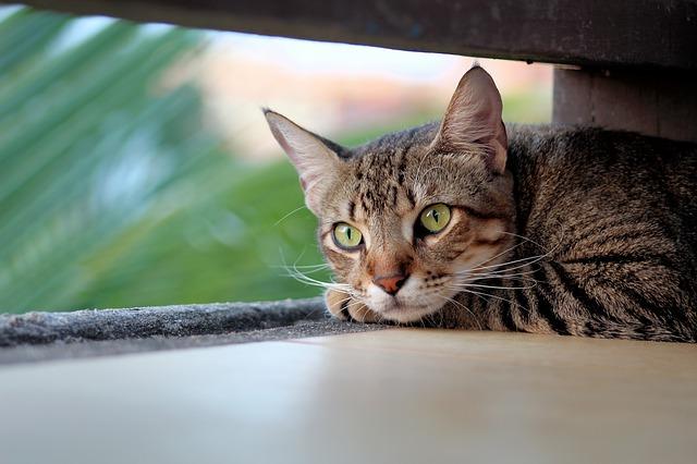 Los gatos tienen la capacidad de detectar presencias inexplicable