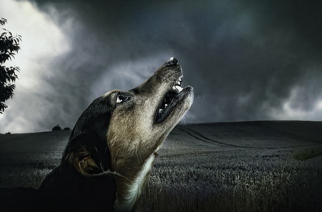 Los perros puede predecir desastres naturales
