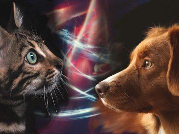 Perros y Gatos, protectores contra energías negativas