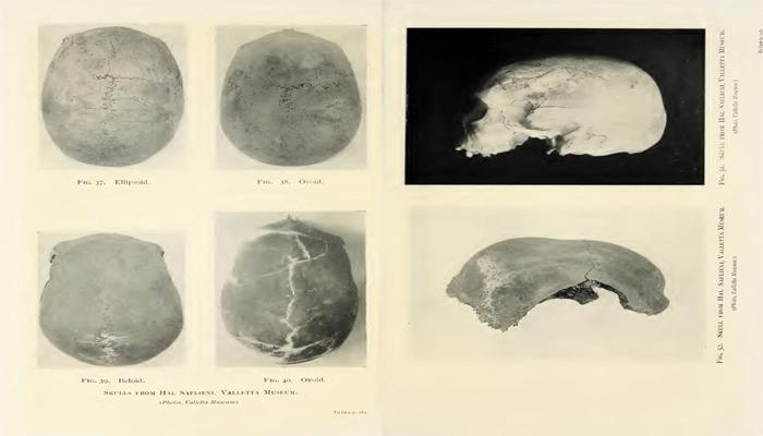 Cráneos prehistóricos encontrados en Malta