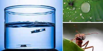 Diseñan una estructura metálica que no se hunde inspirada en arañas y hormigas