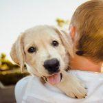 EE.UU. aprueba ley contra crueldad animal