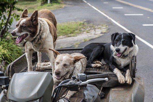 Las personas que cometan terribles actos contra los animales enfrentarán severas penas.