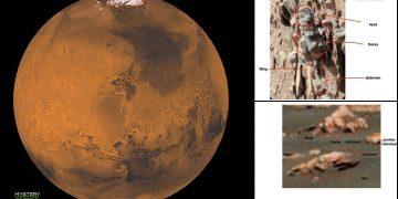 Fotografías muestran evidencia de que existe vida en Marte, afirma profesor universitario