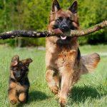 Convierta la edad de su perro en años humanos con esta nueva fórmula