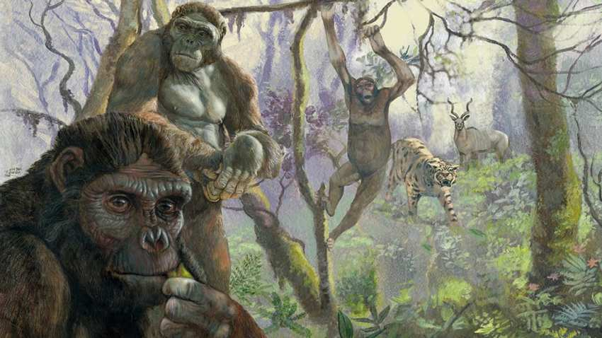 primate con 'piernas humanas' capaz de caminar sobre dos patas