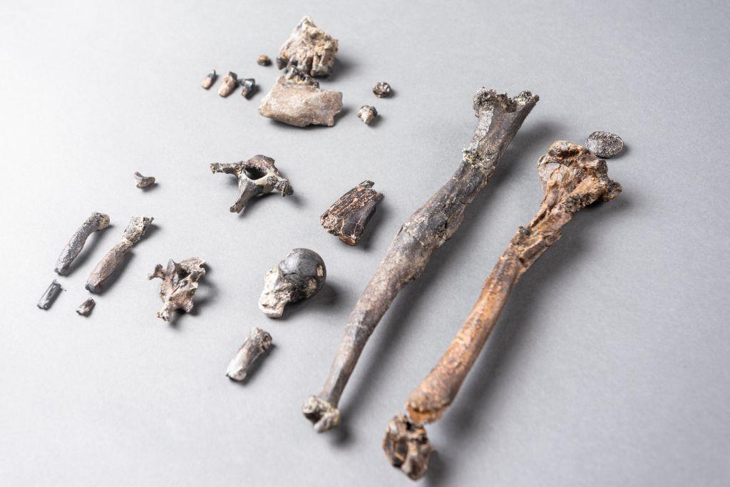 huesos del esqueleto parcial del mono Danubio