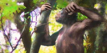 Descubren restos de un primate con 'piernas humanas' de casi 12 millones de años
