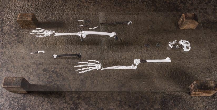 Restos fósiles del Danuvius guggenmosi