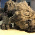Hallan un cachorro de 18,000 años congelado en Siberia que intriga a los científicos