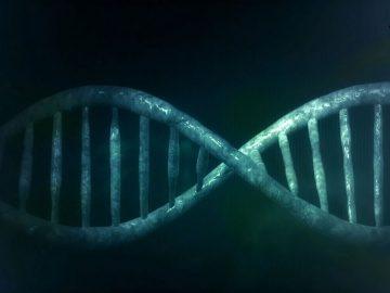 Científicos descubren que el cromosoma Y está desapareciendo de la sangre de los hombres