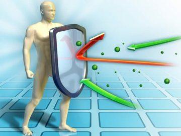 Científicos hallan un 'escudo protector' que impulsa la reparación de los tejidos