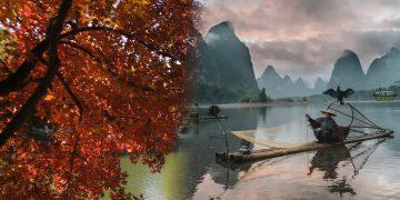 Multarán con 284 mil dólares al que tale un árbol antiguo en China