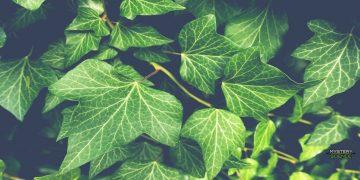 Las plantas podrían emitir sonidos cuando están bajo estrés, revela estudio científico