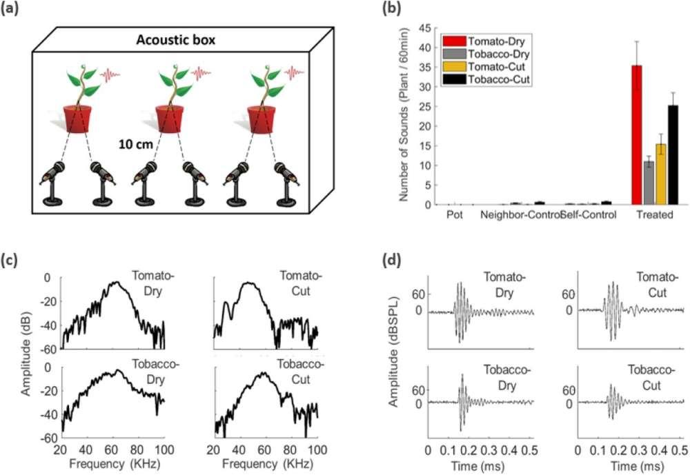 Las plantas emiten sonido cuando se estresan